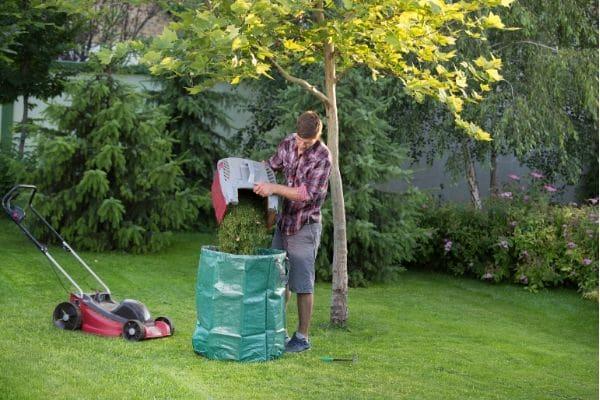 Pailler le sol avec tonte de gazon