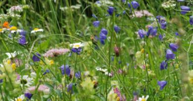 Prairies naturelles et artificielles - Le blog du hérisson