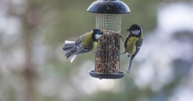 Nourrir les oiseaux des jardins - Le blog du hérisson