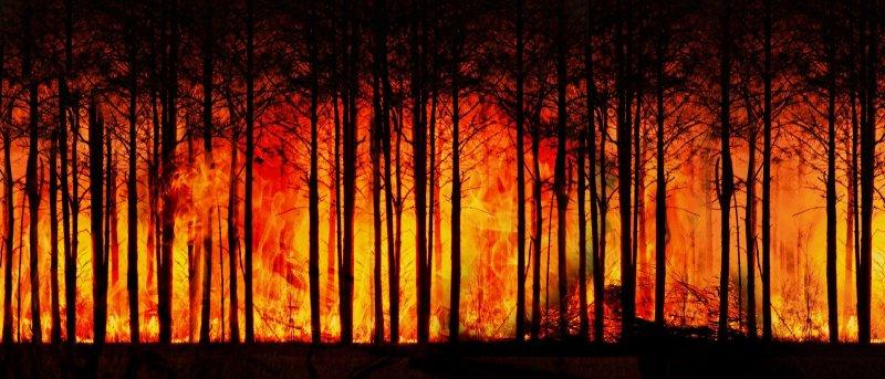 Incendies en Australie : une française témoigne - Le blog du hérisson