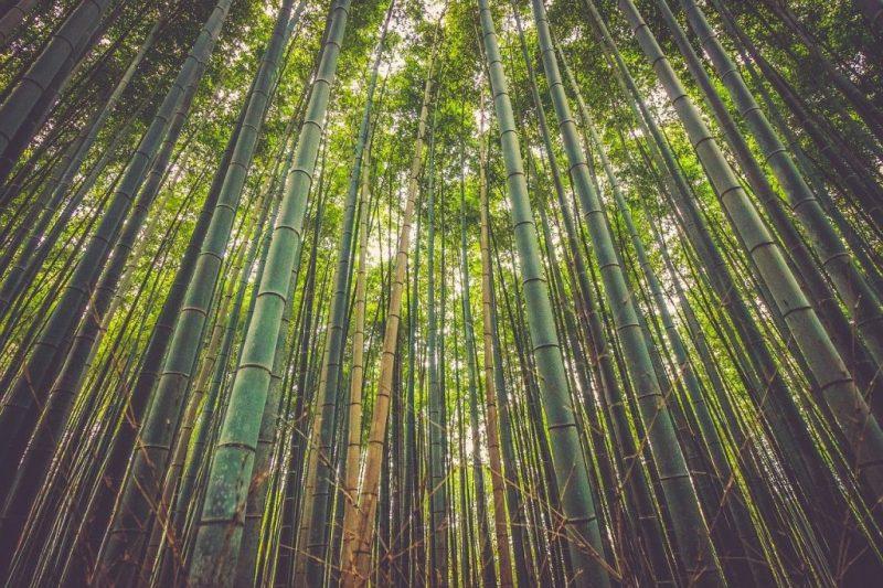 Le bambou une alternative idéale au plastique - Le blog du hérisson