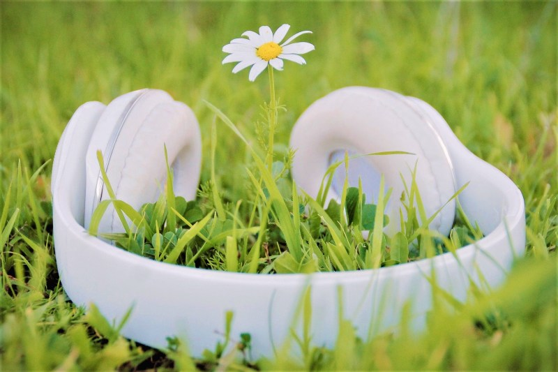 Le chant des plantes : découvrez le secret - Le blog du hérisson