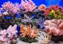 Les récifs coralliens en danger - Le blog du hérisson