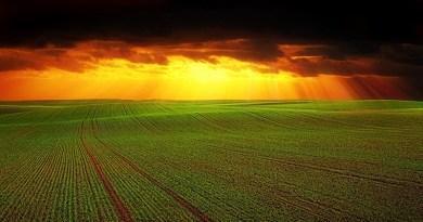 Néonicotinoïdes : les pesticides qui divisent - Le blog du hérisson