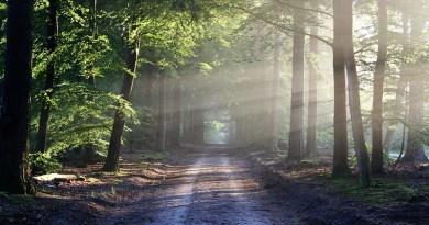 Sylvothérapie : un parcours santé 100 % naturel - Le blog du hérisson