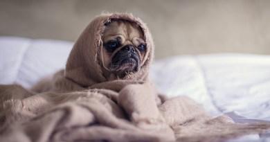 Comment mieux dormir ? 10 astuces imparables - Le blog du hérisson