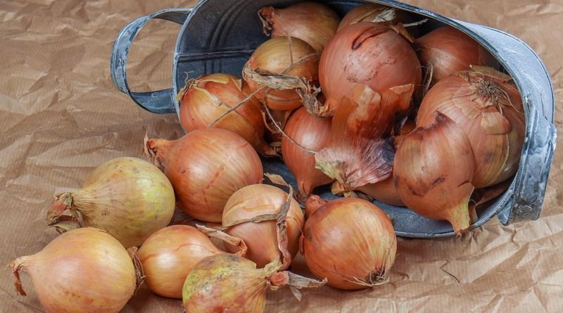 L'oignon pour soigner le rhume et la toux de bébé - Le blog du hérisson
