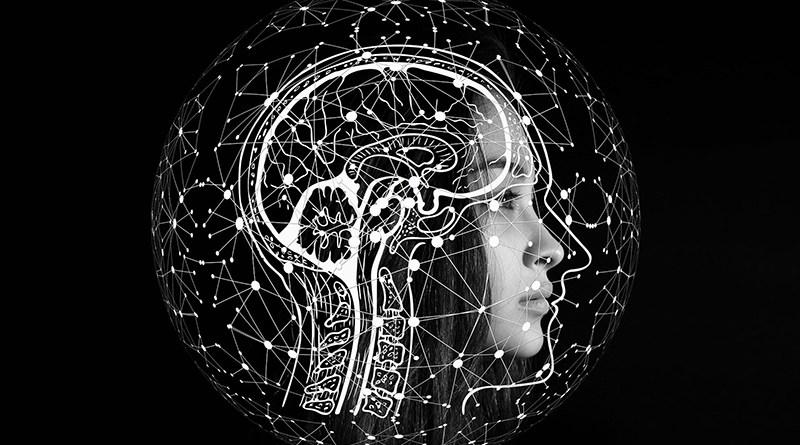 Atlas des connexions cérébrales : une première - Le blog du hérisson