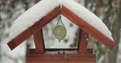 La boule de graisse indispensable aux oiseaux - Le blog du hérisson
