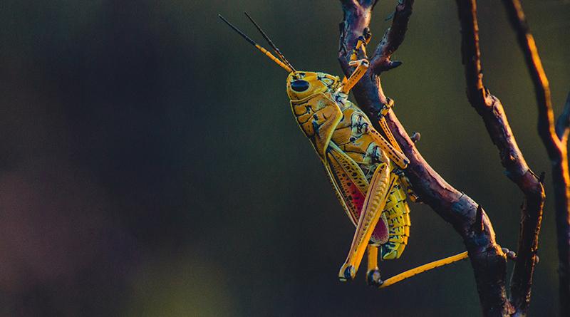 Les insectes bientôt dans nos assiettes ! - Le blog du hérisson