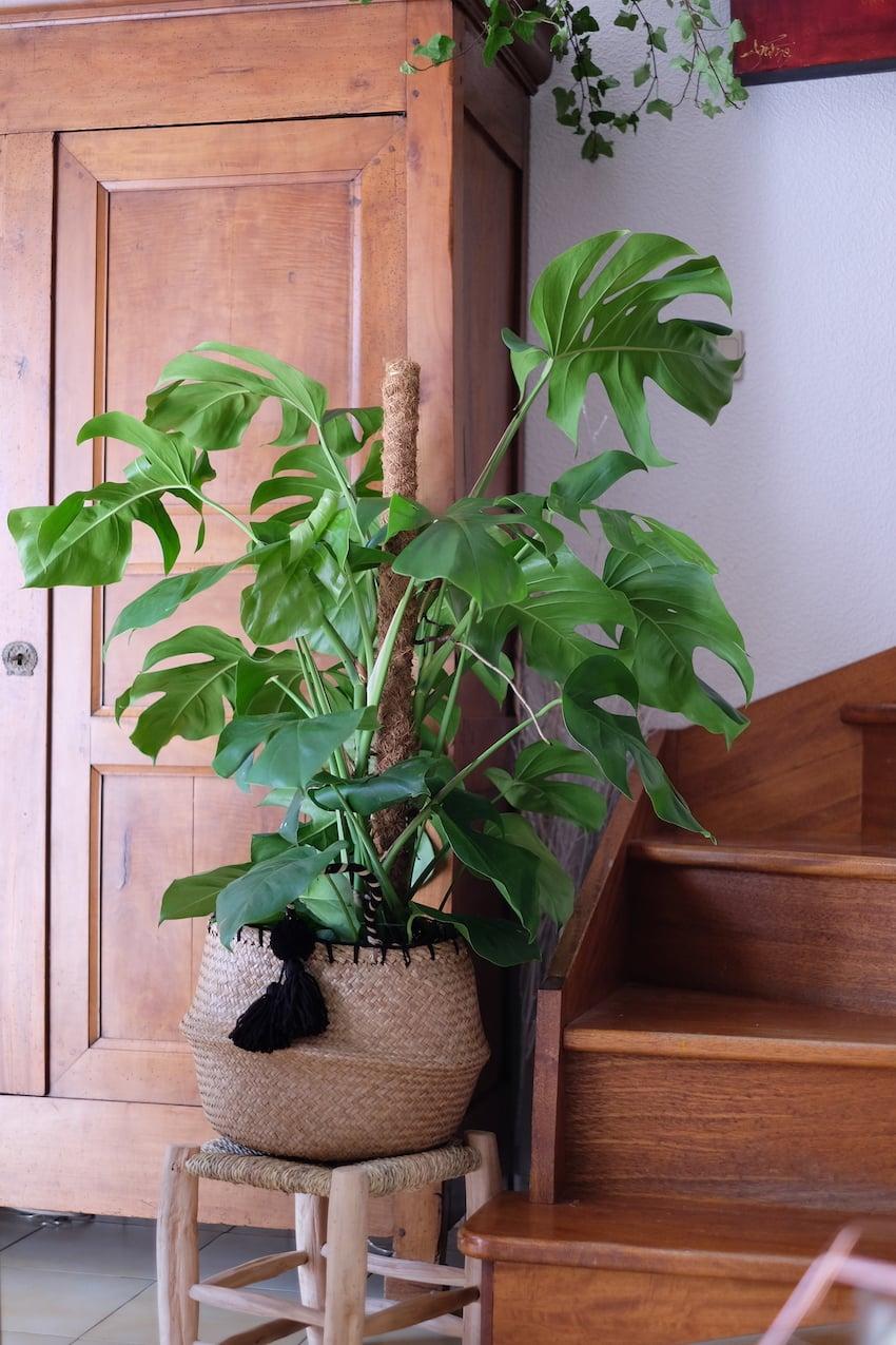Décoration-interieur-plantes-.