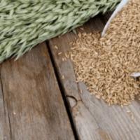 Les bienfaits de l'avoine sur notre santé