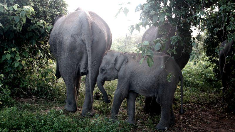 Sri Lanka – Tête à tête avec les éléphants au Parc d'Udawalawe