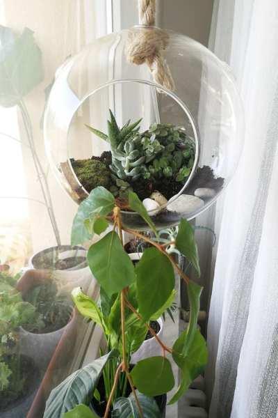 diy plant glass terrarium