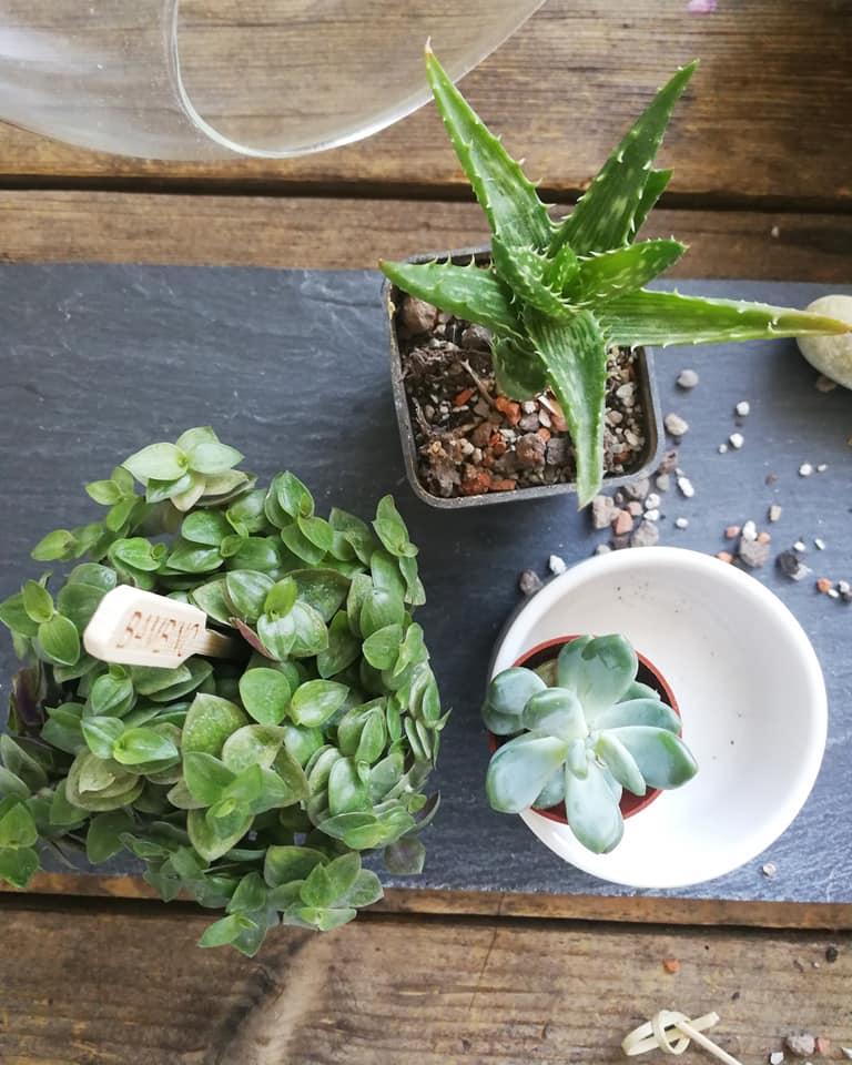 diy plant terrarium succulents