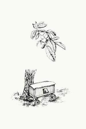 botanical illustration sketch