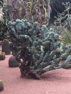 Cactus, jardin de Majorelle