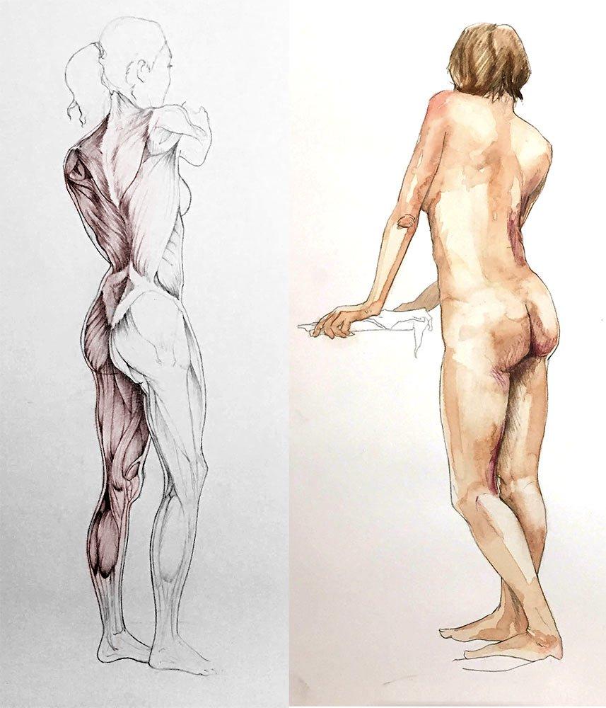 5 Etapes Pour Apprendre L Anatomie Artistique Le Carnet Digital