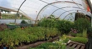 l'arbre de vie, permaculture