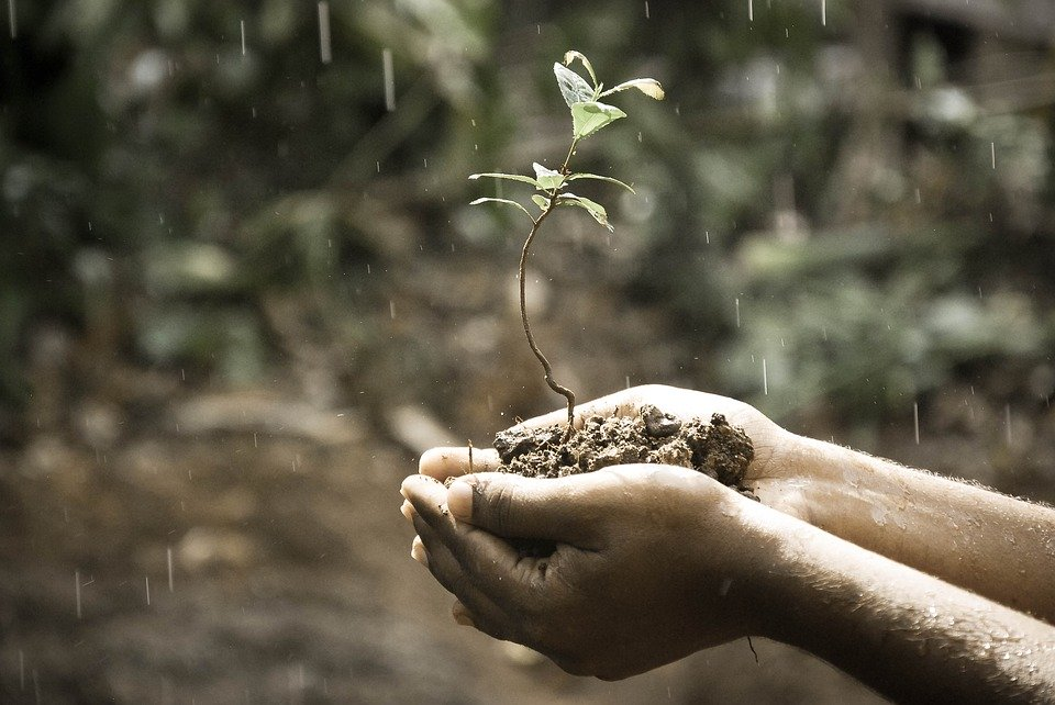 plante dans main