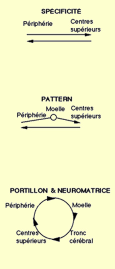 Les Composantes De La Douleur : composantes, douleur, CERVEAU, NIVEAUX!