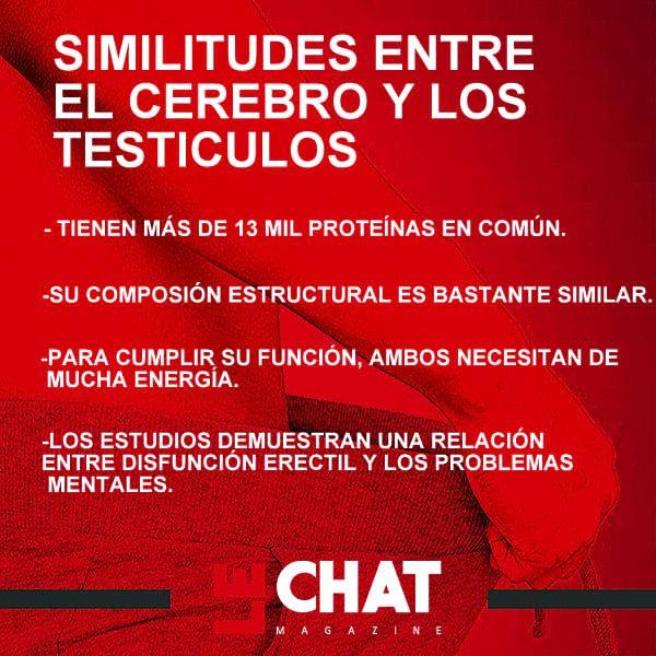 EL CEREBRO Y LOS TESTÍCULOS SON SIMILARES, DICE UN ESTUDIO |LE CHAT MAGAZINE|REVISTA DIGITAL