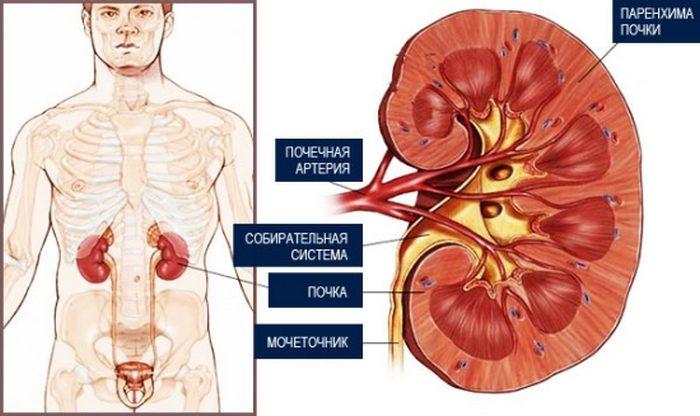 Схема лечения гломерулонефрита — клинические рекомендации. Клинические рекомендации по диагностике, лечению и прогнозу мембранопролиферативного гломерулонефрита
