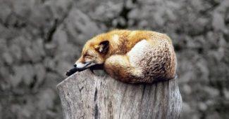 un conseil pour se remettre d'un burnout