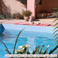 association-protection-animale-agadir-taghazout-05