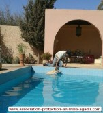 association-protection-animale-agadir-taghazout-07