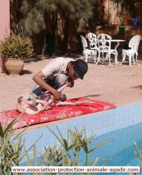 association-protection-animale-agadir-taghazout-12