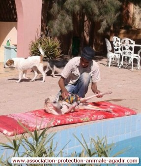 association-protection-animale-agadir-taghazout-13
