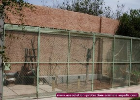 association-protection-animale-agadir-16