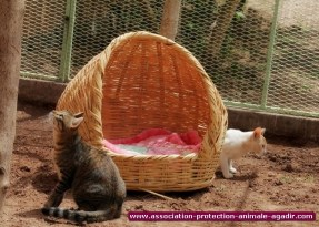 association-protection-animale-agadir-19