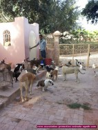 association-protection-animale-agadir-26
