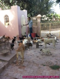 association-protection-animale-agadir-30