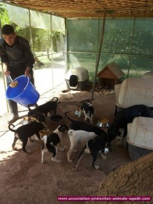 association-protection-animale-agadir-45