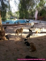 association-protection-animale-agadir-54