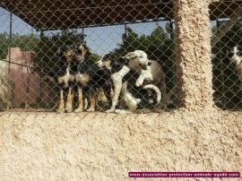 association-protection-animale-agadir-55