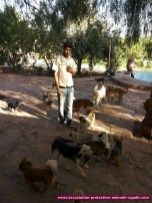 association-protection-animale-agadir-56