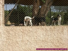 association-protection-animale-agadir-63