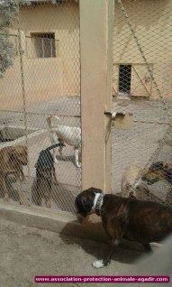 association-protection-animale-agadir-67