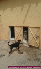 association-protection-animale-agadir-72