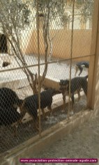 association-protection-animale-agadir-73