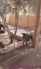 association-protection-animale-agadir-79