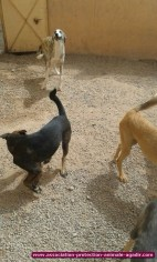 association-protection-animale-agadir-82
