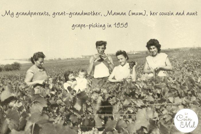 1959 - grape-picking