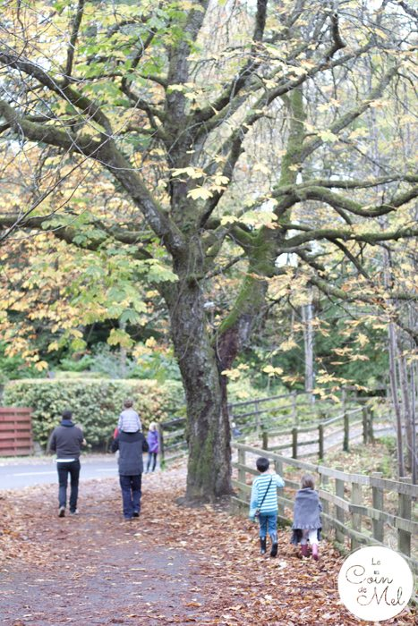 Pitlochry - the ideal place to stop on your way to the Scottish Highlands - River Tummel in Autumn Fall - a Lovely Walk with the Family