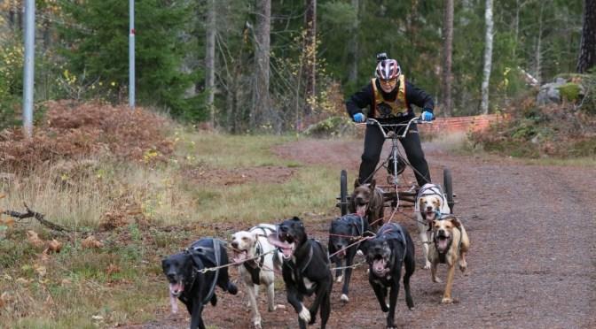Résultats des championnats du monde dryland (courses de chiens sur terre) 2019 en Suède