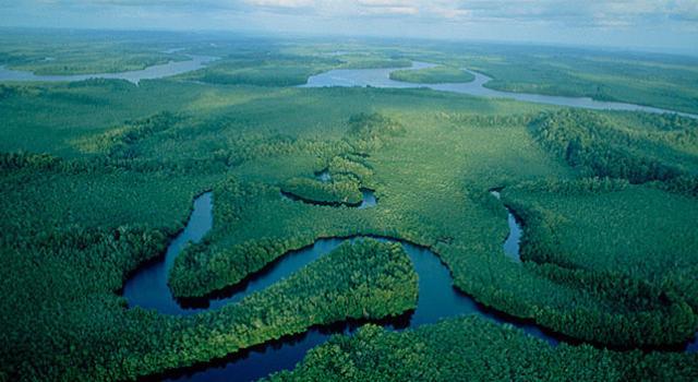 RDC: deux grandes mesures du gouvernement pour préserver ses forêts après la levée du moratoire